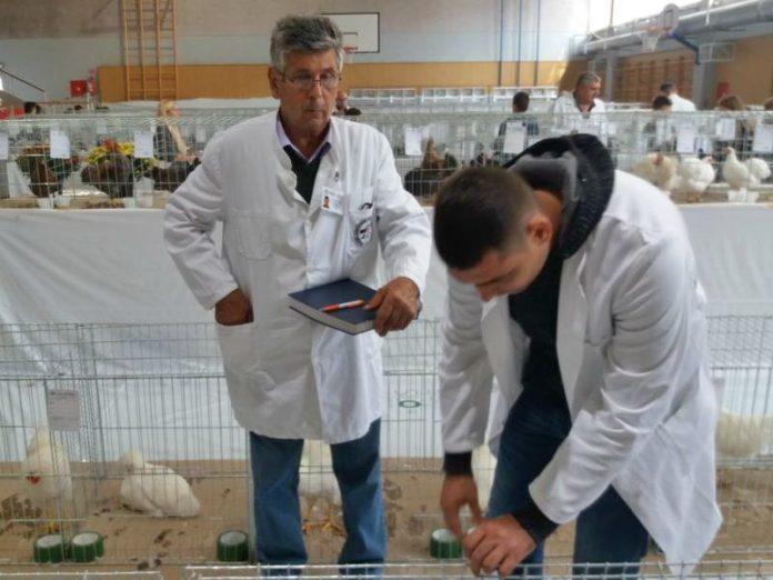 izložba malih životinja feniks borovo