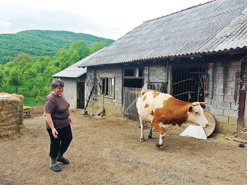 Marica Dubajić donja suvaja zalužje lički sir krava
