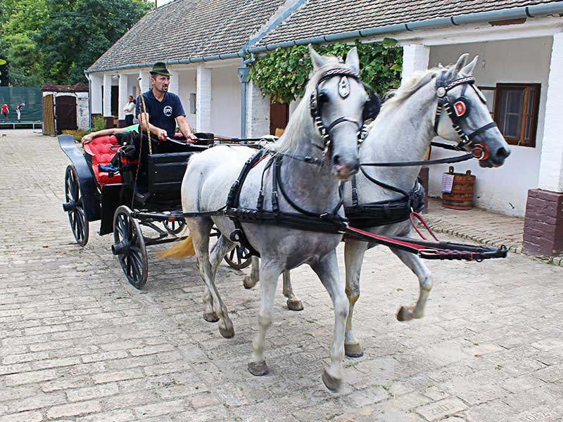 Pudarina Bijelo Brdo konji