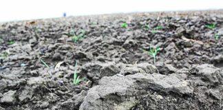 Poljoprivredno zemljište opština markušica trpinja poljoprivreda