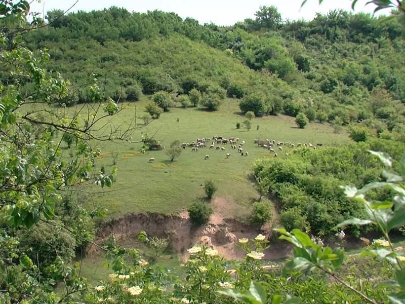 Mohovo dolina mamuta