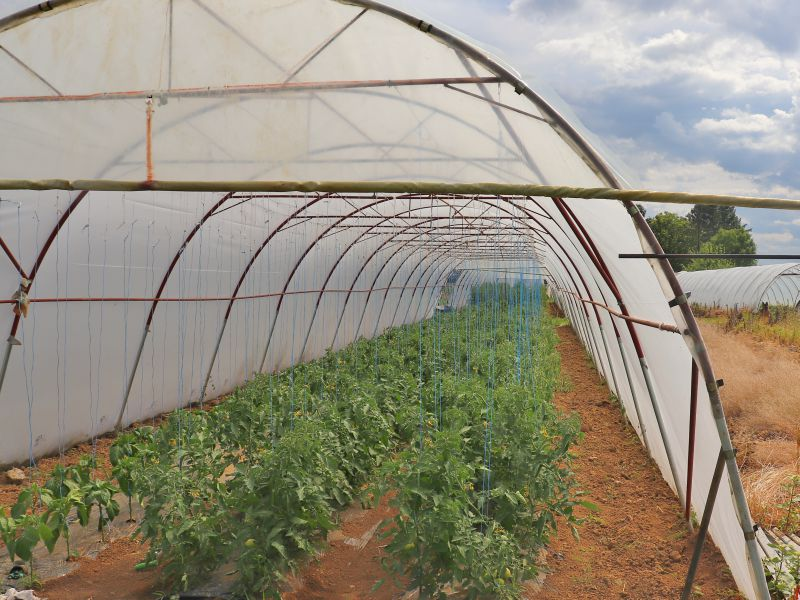 Prvča plastenici poljoprivreda