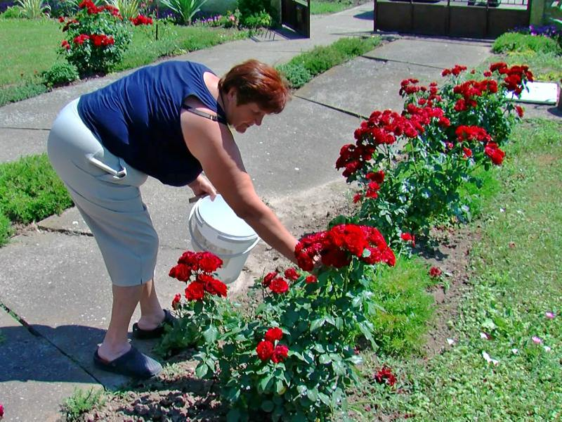 Ilinka Savičić Cvet po cvet cvetored