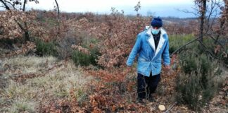 Islam latinski seča šuma Nikola